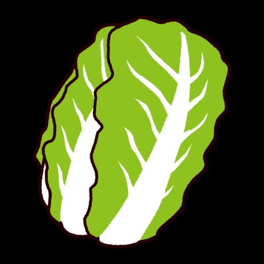 野菜のイラスト(白菜)(2カット)