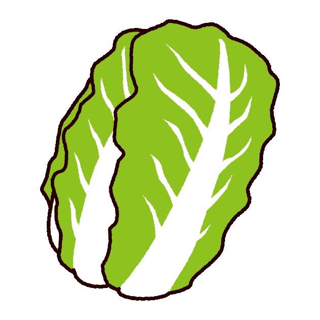 野菜のイラスト(白菜)(2カット) | イラストくん