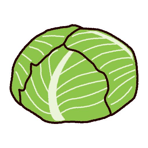 野菜のイラスト(キャベツ)(2カット)