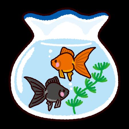 金魚のイラスト(金魚鉢)