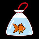 金魚すくいの金魚のイラスト(祭り)