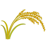 稲穂のイラスト