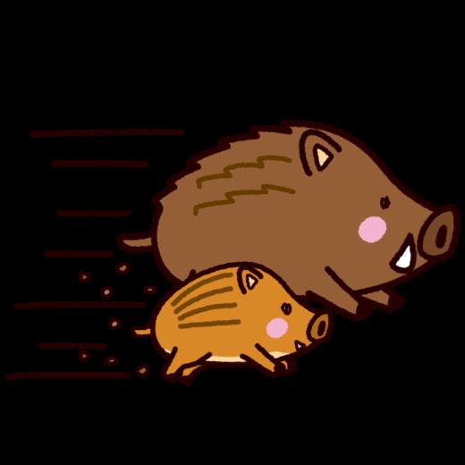 イノシシのイラスト(猪突猛進、2019干支)(7カット)