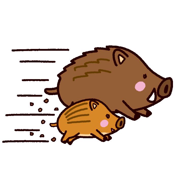 イノシシのイラスト猪突猛進2019干支7カット