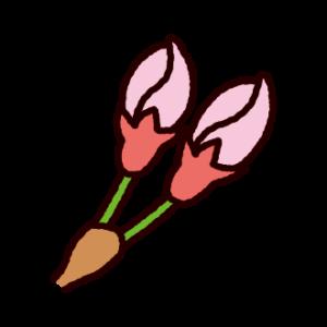 桜のつぼみのイラスト