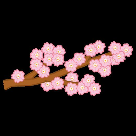 桜の枝のイラスト(2カット)