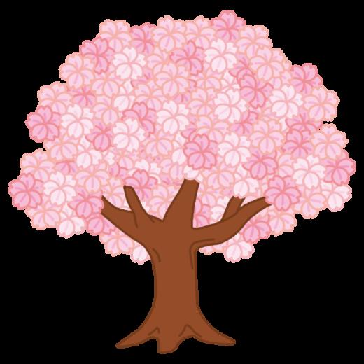 満開の桜の木のイラスト(2カット)