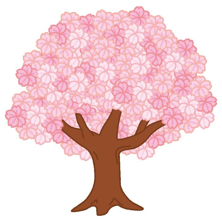 満開の桜の木のイラスト2カット イラストくん