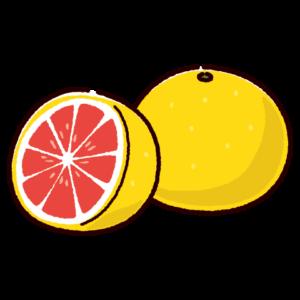 ピンクグレープフルーツのイラスト
