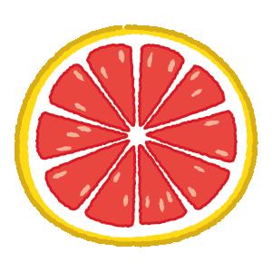 グレイープフルーツのイラスト(輪切り)(2カット)
