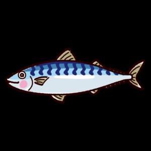 魚のイラスト(鯖・サバ)