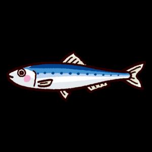 魚のイラスト(鰯・イワシ)