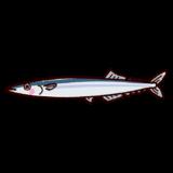 魚のイラスト(秋刀魚・サンマ)