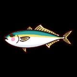 魚のイラスト(鰤・ブリ)