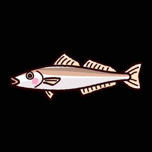 魚のイラスト(鱚・キス)