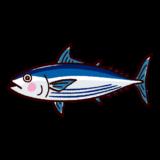 魚のイラスト(鰹・カツオ)