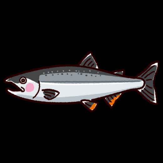 魚のイラスト(鮭・シャケ)