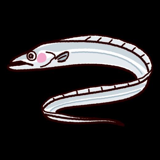 魚のイラスト(太刀魚・タチウオ)