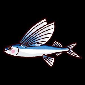 魚のイラスト(飛魚・トビウオ)