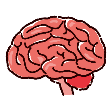 脳のイラスト(2カラー)