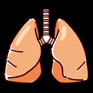 肺のイラスト(内臓・臓器)