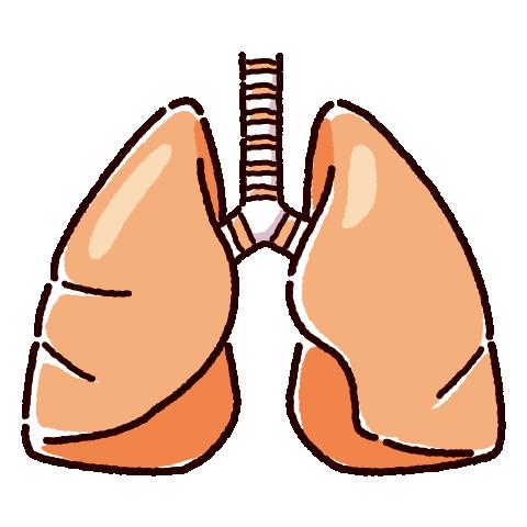 肺のイラスト(内臓・臓器)(2カラー)