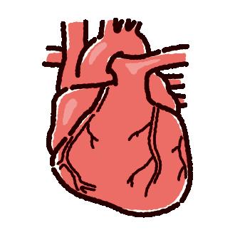 心臓のイラスト(内臓・臓器)(2カラー)