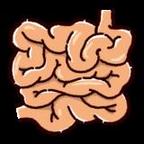 小腸のイラスト(内臓・臓器)