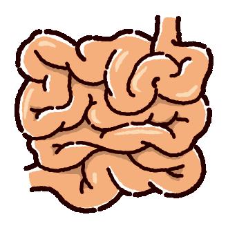 小腸のイラスト(内臓・臓器)(2カラー)