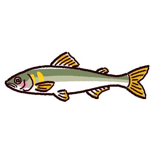 魚のイラスト(鮎・アユ)(2カラー)