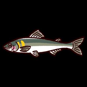 魚のイラスト(鮎・アユ)